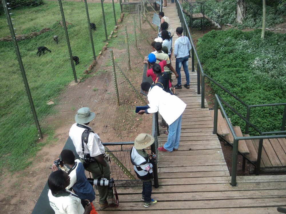 Chimp viewing platform Ngamba