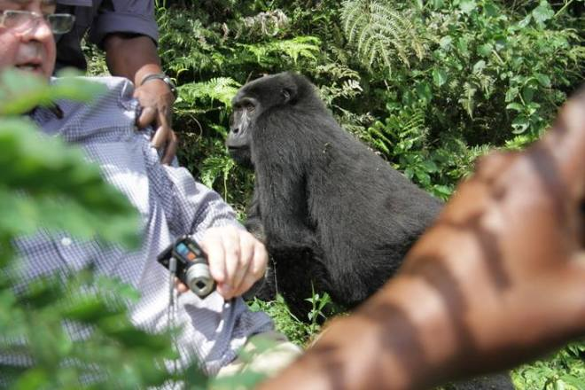 Gorillas wildlife tracking