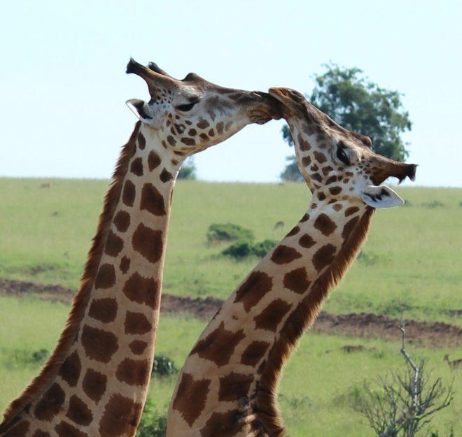 Wildlife and Cultural Safari